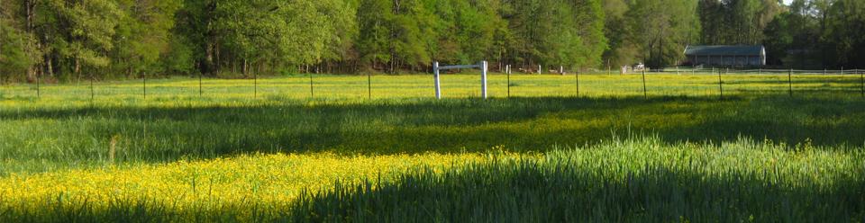 Georgia-Alabama Land Trust conserved family farm